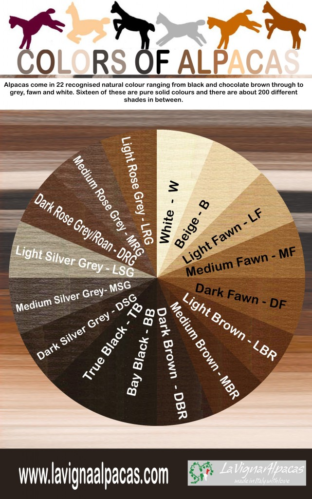 Alpacas_colors_infographic-1-641x1024